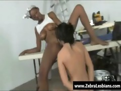 zebra cuties - swarthy lesbo hotties enjoy
